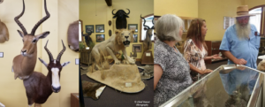 A Natural History Around the World at Belton Area Museum Association @ Belton Area Museum Association